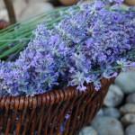 květinová-voda-z-levandule