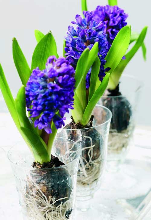 hyacint-wellness-dekorace-k