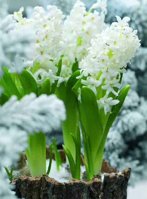 kvetiny-ve-wellness-a-spa-d