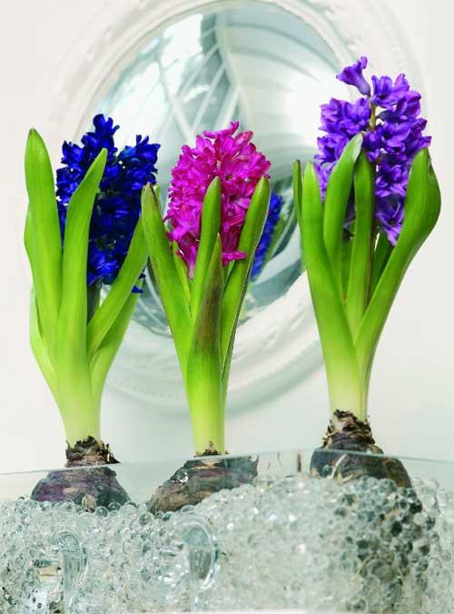 kvetiny-ve-wellness-a-spa-i