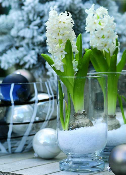 kytky-ve-wellness-dekorace-