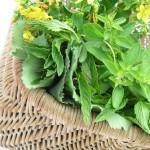 Horoskop podle bylinek - Léčivé bylinky ve zvěrokruhu