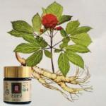 Léčivý ženšen - povzbudí tělo i mysl - energie z přírody