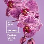 Barva roku 2014 - zářící orchidej - rok fialové orchideje