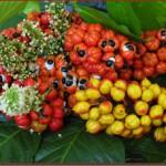 Guarana - elixír života a zdroj energie, jaká guarana je kvalitní?