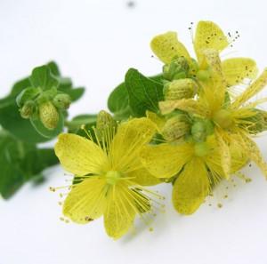 trezalka-bylinky-wellness-s