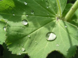 kontryhel-aroma-bylinky-vos