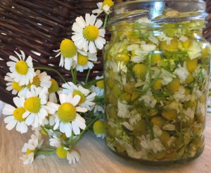 macerat-olej-bylinky-wellne