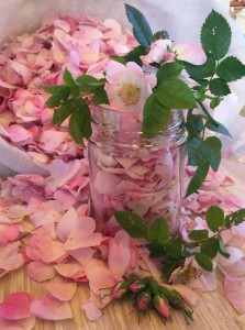 macerat olej bylinky wellness (11)