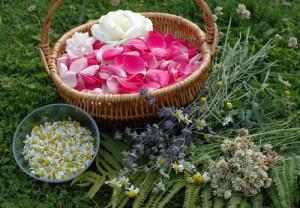 macerat olej bylinky wellness (3)