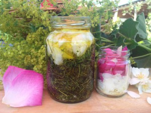 macerat olej bylinky wellness (4)