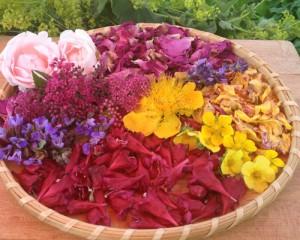 macerat olej bylinky wellness (7)
