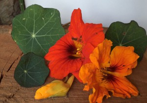 1 lichorerisnice-kvety-jedle