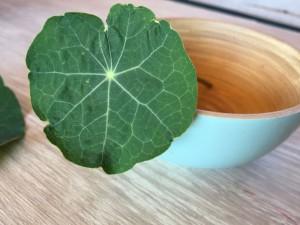 lichorerisnice kvety jedle bylinky wellness (2)