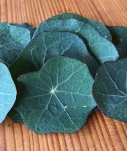 lichorerisnice kvety jedle bylinky wellness
