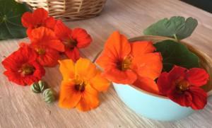 lichorerisnice kvety jedle bylinky wellness (3)