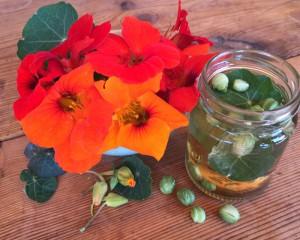 lichorerisnice kvety jedle bylinky wellness (5)
