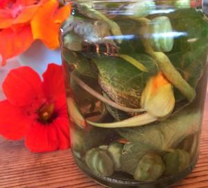 lichorerisnice kvety jedle bylinky wellness (6)