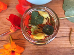 lichorerisnice kvety jedle bylinky wellness (7)