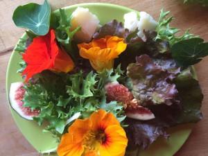 lichorerisnice kvety jedle bylinky wellness (8)