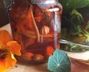 lichorerisnice kvety jedle bylinky wellness (9)