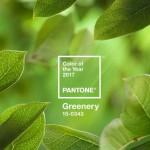 Wellness trendy 2017 - svěží zelená - Pantone  barva roku 2017