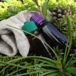 Jarní očistná sauna, zahřeje i posílí - aromaterapie do sauny