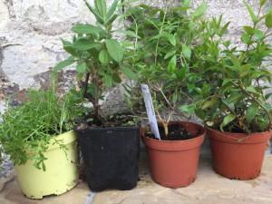 wellness bylinky sauna aroma (5)